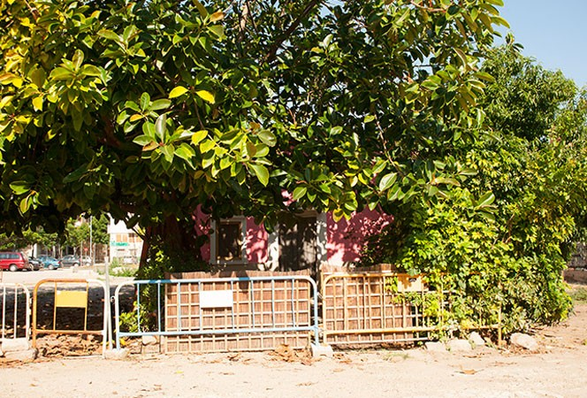 Ficus y casa de campo en la Senda de la Capelleta de la Malva-rosa. Foto: Juanjo Hernández