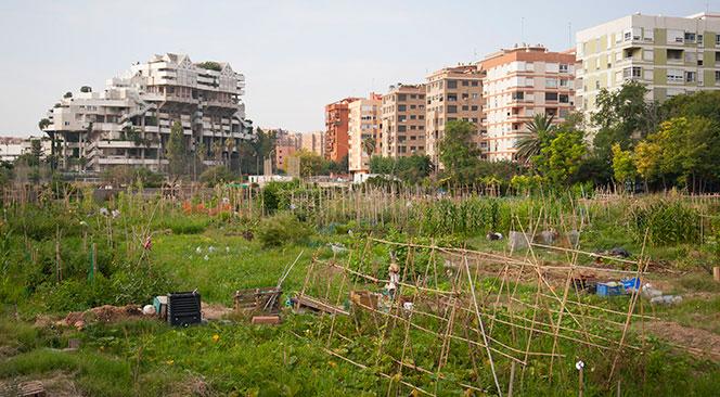El Edificio Espai Vert visto desde una zona de huertos urbanos. Foto: Juanjo Hernández