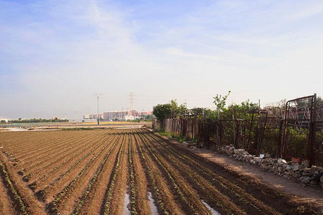 Trozos de huerta en las proximidades de San Miguel de Los Reyes. Foto: Juanjo Hernández