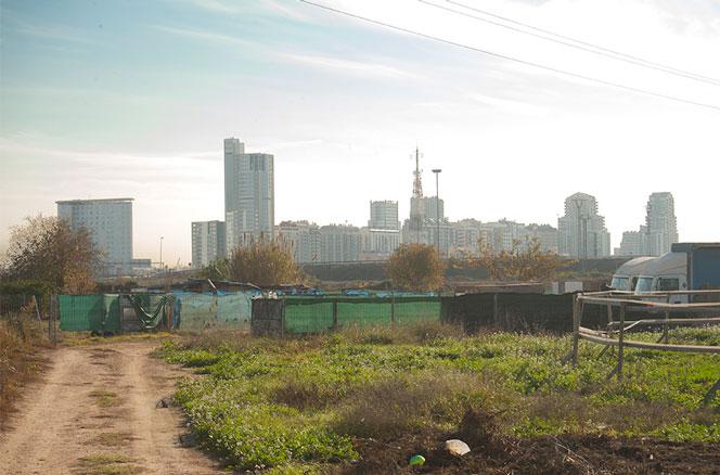 Huertos urbanos entre Benimàmet y Burjassot con los edificios de la Avenida Cortes Valencianas al fondo. Foto: Juanjo Hernández