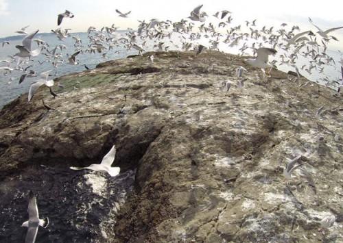 Dronestagram, la red social de fotografía drone