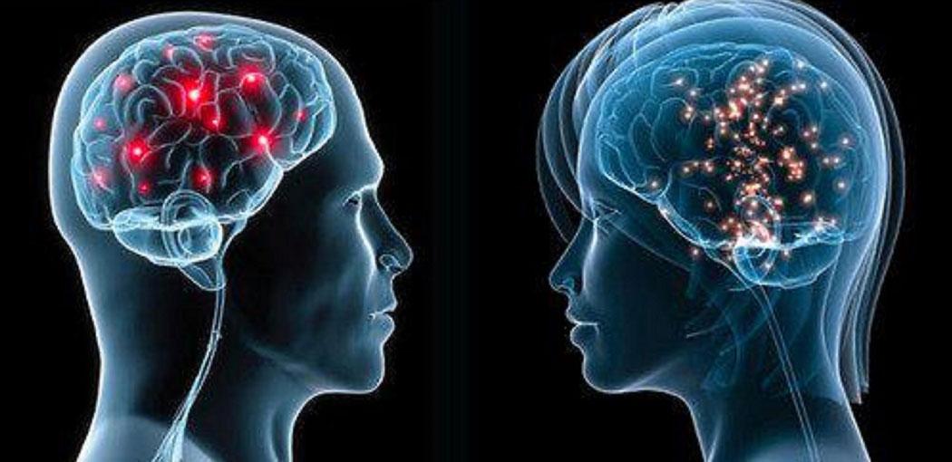 El sexo del cerebro