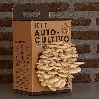 Kit de autocultivo de setas, en Curiosite
