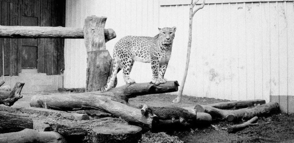 Zoocosis de Estela de Castro
