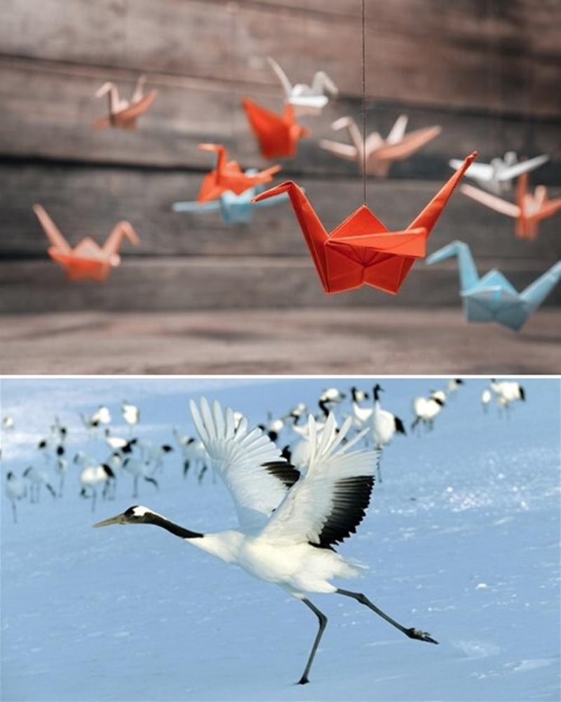 Grullas de origami y ejemplar de grulla japonesa.