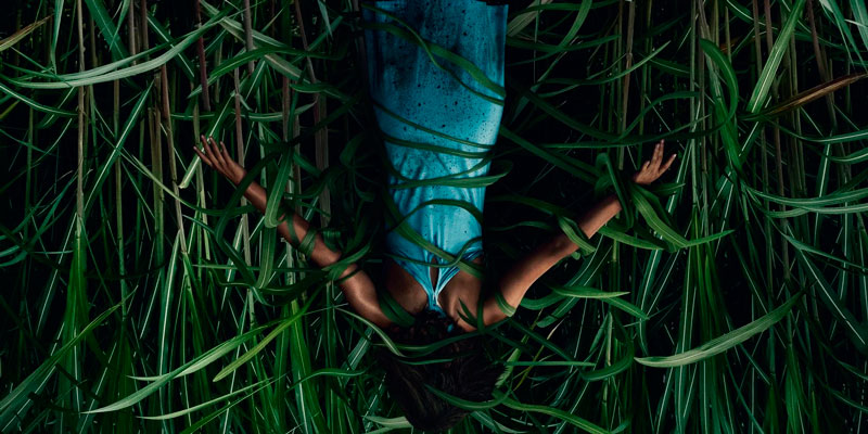 En la hierba alta (Vincenzo Natali, 2019). Cine fantástico y de terror
